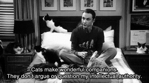 Sheldon Cooper, you are a true crazy cat lady!: Crazy Cats, Sheldon Cooper, Intellectual Author, Wonder Companion, Big Bangs Theory, Quality, Beckham, Funnies Stuff, Cats Lady