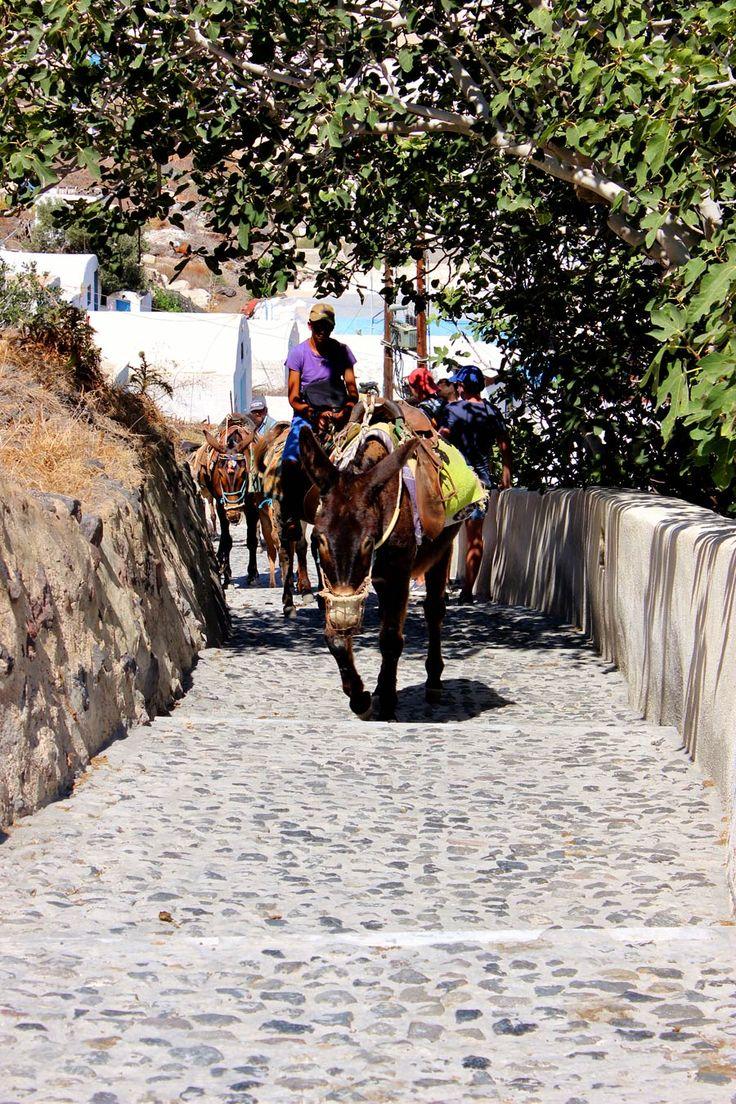 Les ânes de Santorin #santorini #greece