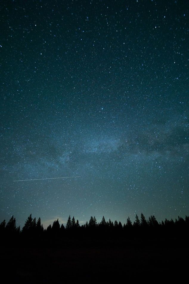 Trees Under Blue Sky And Stars During Nighttime Photo Photo Free Night Image On Unsplash Night Sky Wallpaper Sky Pictures Forest Photos