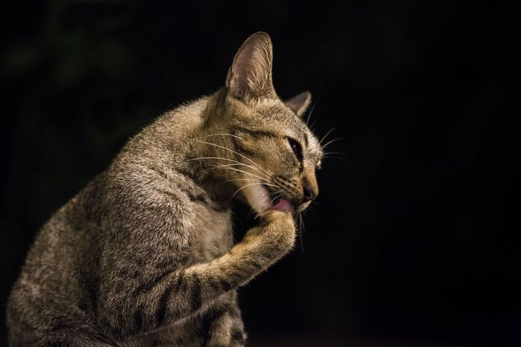 """The God Cat"" Photo by Emanuele Del Bufalo -- National Geographic Your Shot"