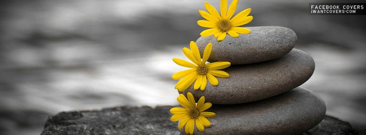 Yellow Flowers Facebook Covers | Photography | Pinterest ...