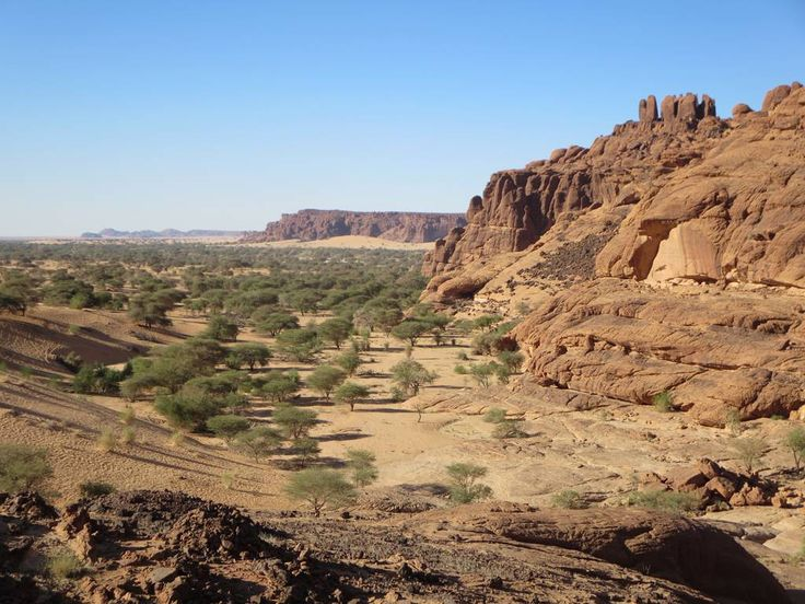 Acacia trees fill the plains near Wadi Archei in the Ennedi Mountains, Chad, Central Africa.