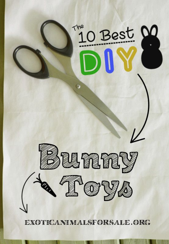 "Blog Featured Image for Post Titled, ""10 Best DIY Bunny Toys"""