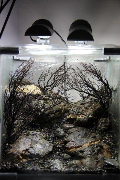 Dark tank www.ibrio.it your aquarium born here ! il tuo acquario nasce qui ! https://www.facebook.com/ibrio.it #ibrio #acquario #acquari #acquariologia #acquariofilia #aquarium #aquariums #piante #natura #pesci #zen #design #arredamento #layout #layouts #layoutdesign #roccia #roccie  #moss #freshwater #plantedtank #aquadesignamano #tropicalfish #fishofinstagram #aquaticplants #natureaquarium #nanotank #reefkeeper #nanoreef #saltwateraquarium from web