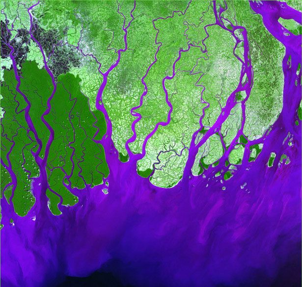 Ganges River Delta - The Ganges River forms an extensive delta where it empties into the Bay of Bengal. The delta is largely covered with a swamp forest known as the Sunderbans, which is home to the Royal Bengal Tiger.