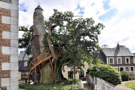 France's Oldest Tree Sprouts Treehouse Chapels, Has Been Alive Since Louis IX