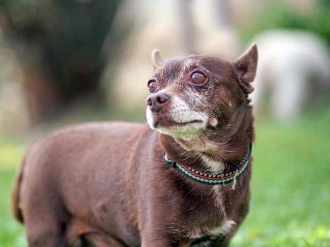 11 причин взять из приюта взрослую собаку вместо щенка