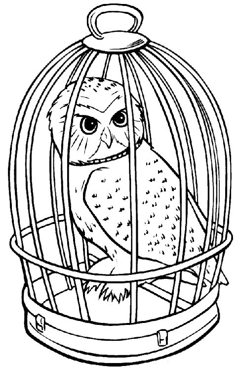 Harry Potter Owl Coloring Page In 2019 Harry Potter