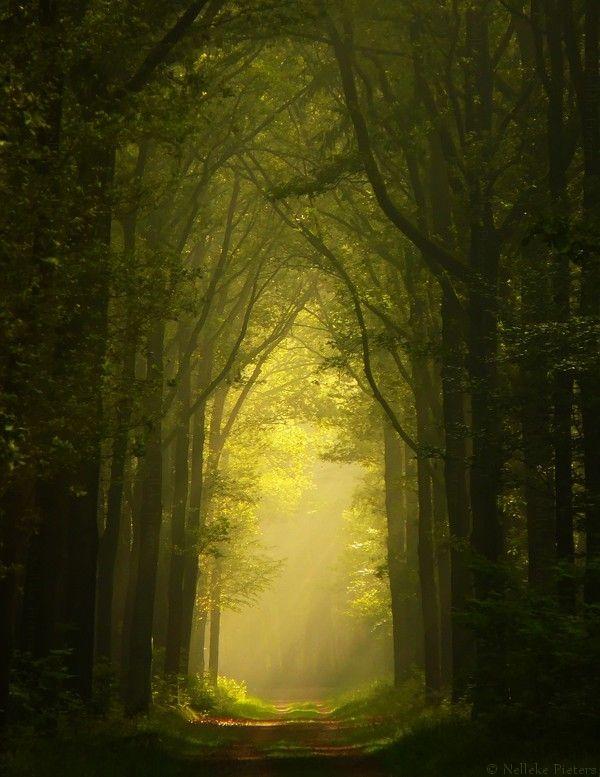 Caminho de Luz entre árvores