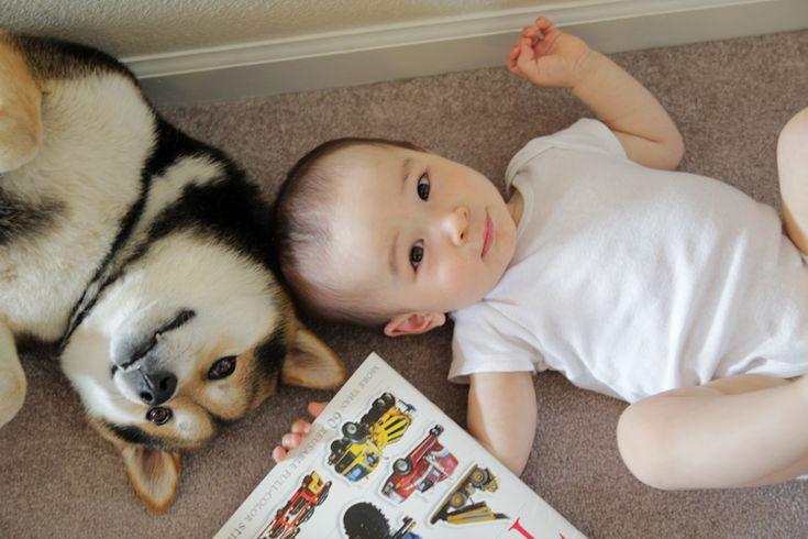 CUTE ALERT! Shiba Inu Maru and Baby Boy Issa Are BFFs