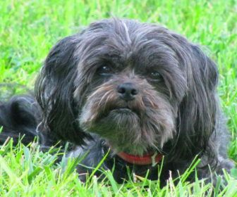 Best Cute Puppy Names For Affenpinscher Best Cute Puppy Names Dogs