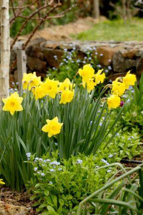 12 best spring flowers gallery 7 of 12 - Homelife