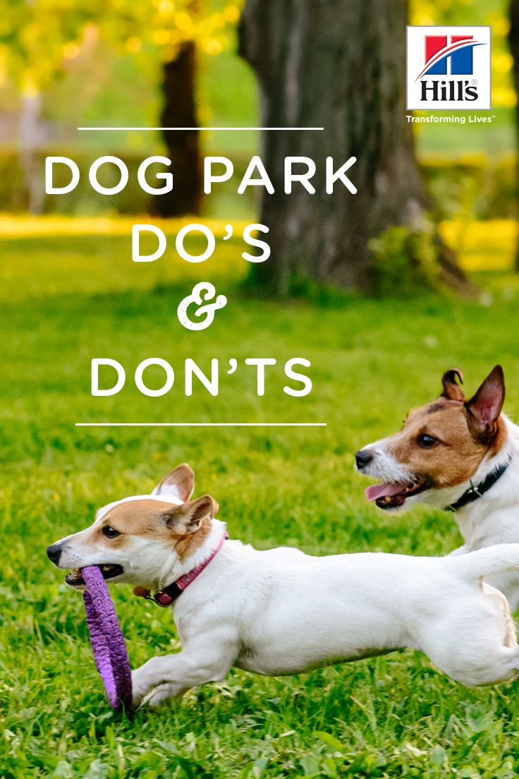 Dog Park Etiquette Things To Keep In Mind Dog Park Etiquette Socializing Dogs Dog Park