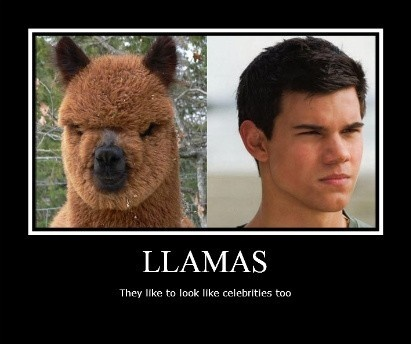too funny..Funny Peas Pi, Funny Llamas, Alpacas, Too Funny, Funny Fitness, Celebrities, Funny Animal, Hilarious, Funny Random Because