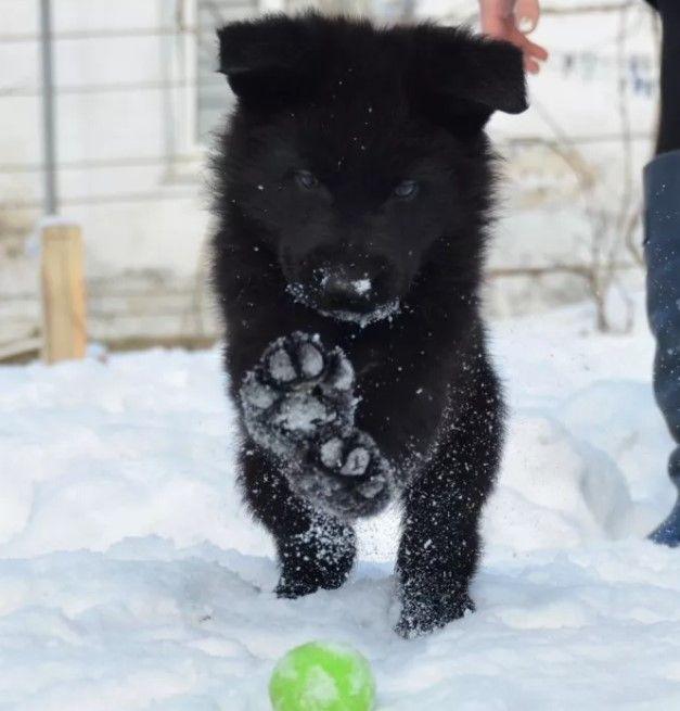 35 Female Names For Black Dogs Black Dog Best Dog Names