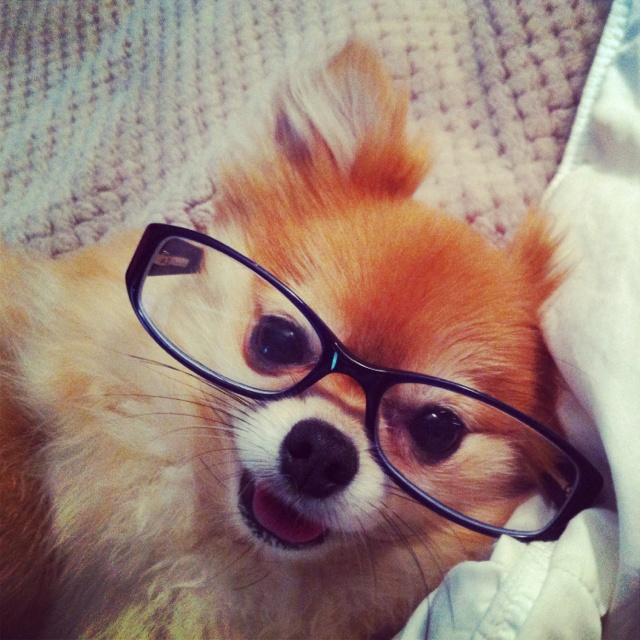 Motivational Quotes For Sports Teams: 17 Best Images About Dogs Wearing Glasses On Pinterest