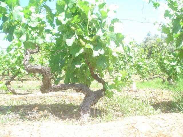 vines on pinterest - photo #8