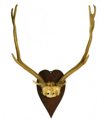 10 Point Mounted Deer Antlers Trophy on a Wooden Plaque, Vintage French