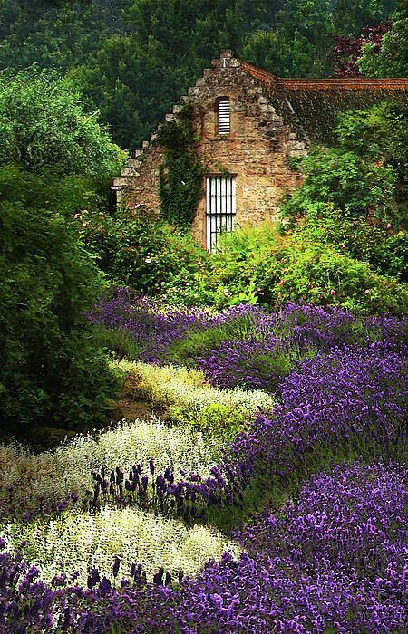 Lavender Garden: Gorgeous with the little stone cottage.