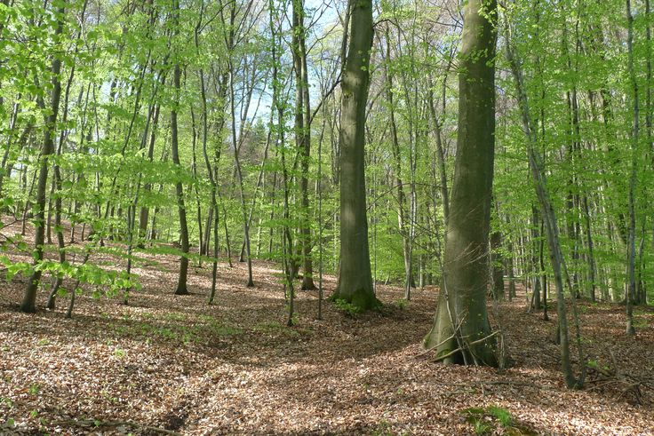 Odenwald forest, Germany, April 2014