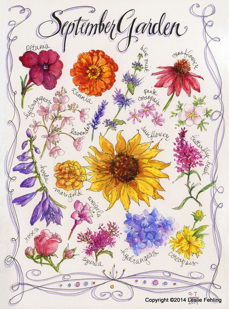 SWIRLY border + DOTS - An exuberant border of curves, swirls, loops, and dots frames a collection of late summer flowers.