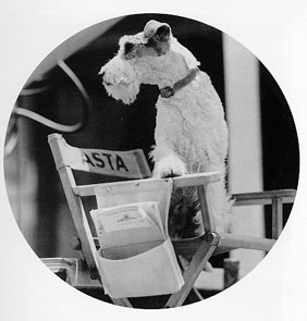 Film, Wire Foxes Terriers, Hollywood Stars, Hipster Dogs, Movie, Wirehaired Foxes, The Thin Man, Golden Age, The Wire