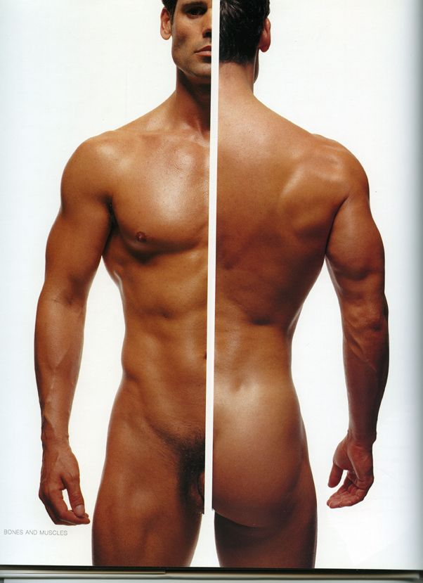 Front And Back Reference Pinterest Anatomy Anatomy Reference