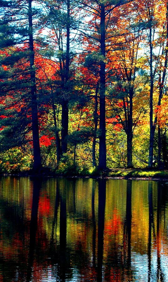Fall In Reflection Photograph by Emily Stauring - Fall In Reflection Fine