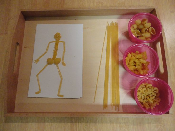 Het menselijke lichaam - Skelet  Making a Skeleton out of Pasta (Photo from Discovery Days and Montessori Moments)
