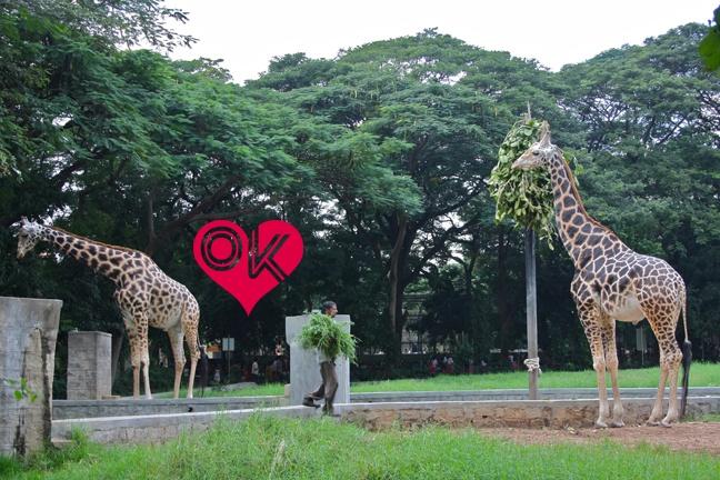 Famous Mysore Zoo, Karnataka, India