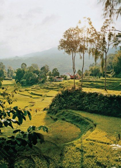SULAWESI  The clove-scented rice fields of Tana Toraja, with their prow-shaped barns and homes, are the kind of otherworldly landscape found only on Sulawesi.