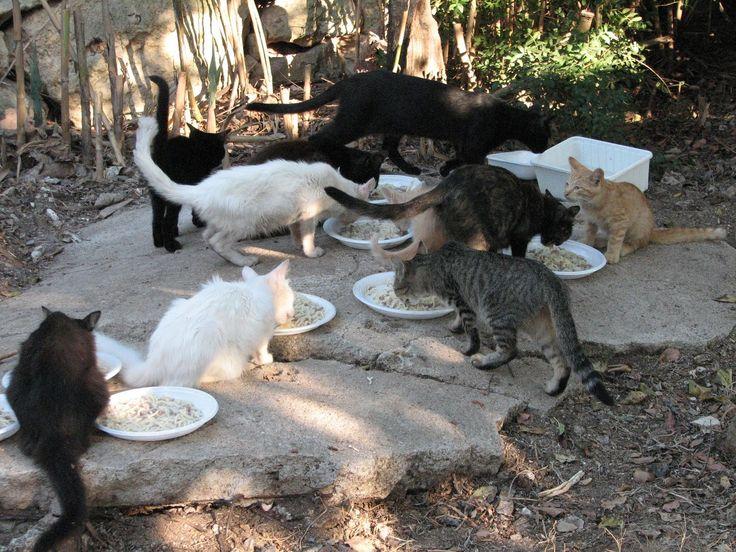 La colonia felina. Norme e comportamenti