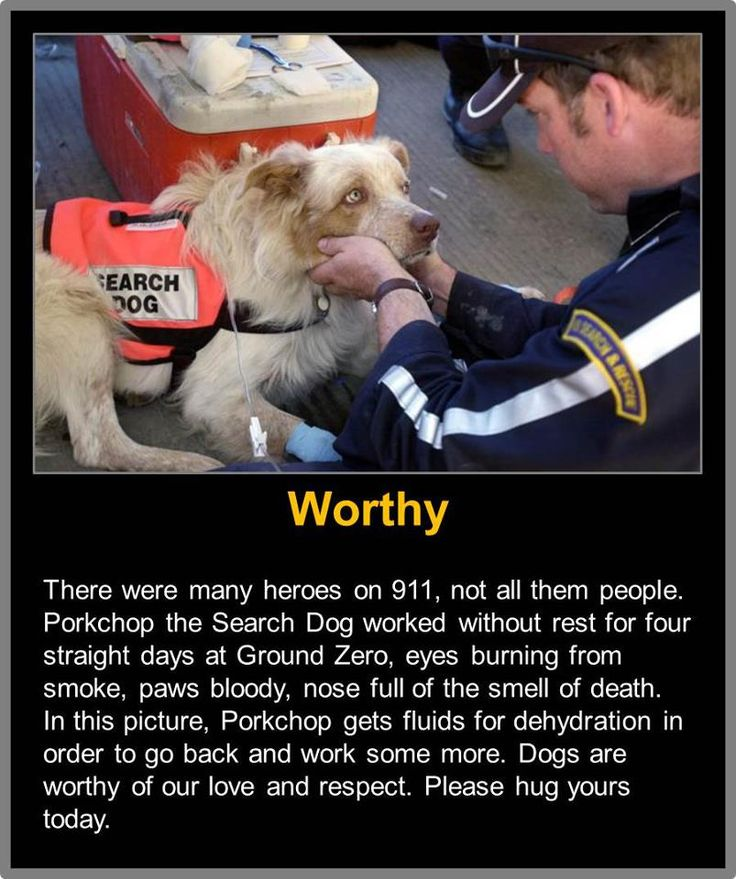 Best Search Rescue And Cadaver Dogs Images On Pinterest - Cute portraits baby and rescue dog