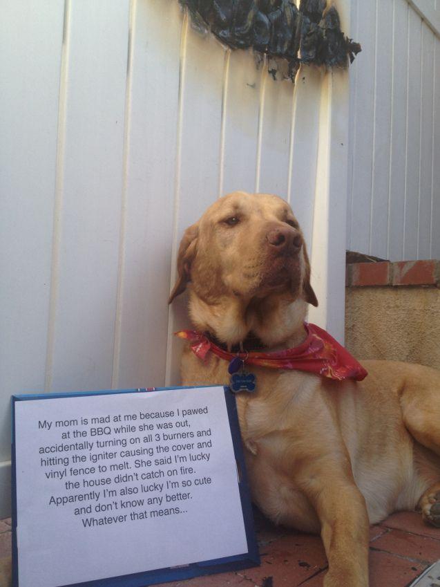 maymo and penny dog shaming christmas