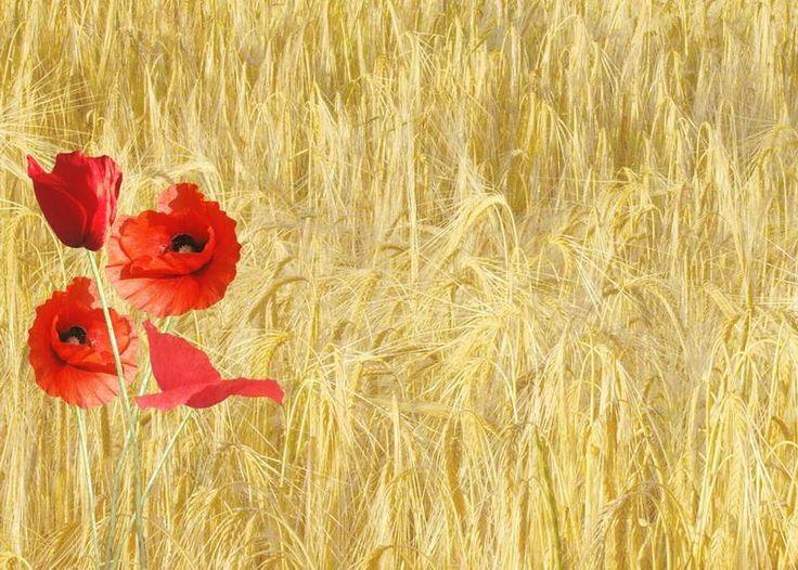 46 best Poppy - wall art images on Pinterest | Poppies, Art flowers ...