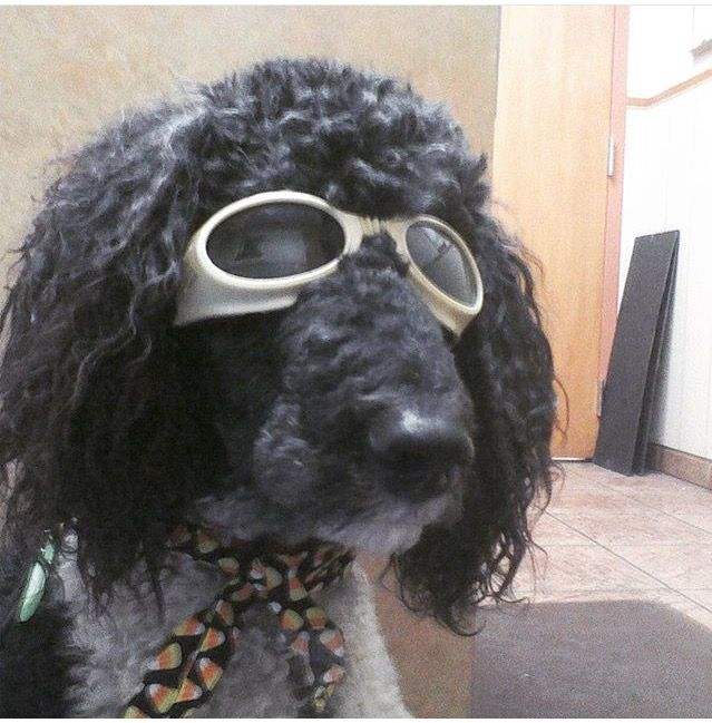 You have to see it to believe it! For the last 3 years, Metairie Small Animal Hospital has been using Class IV laser therapy as a drug free alternative to speed healing and aid in pain relief for both acute and chronic conditions. #msah101 #lasertherapy #arthritis #dogs #cats