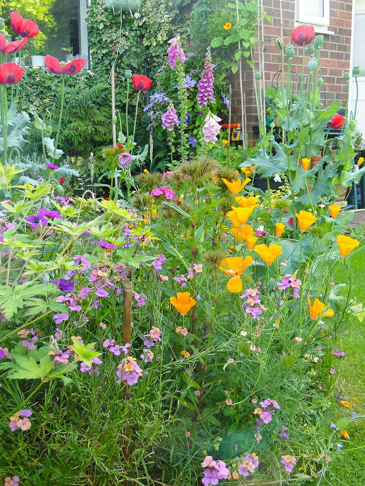 Our mid June Lincolnshire Garden