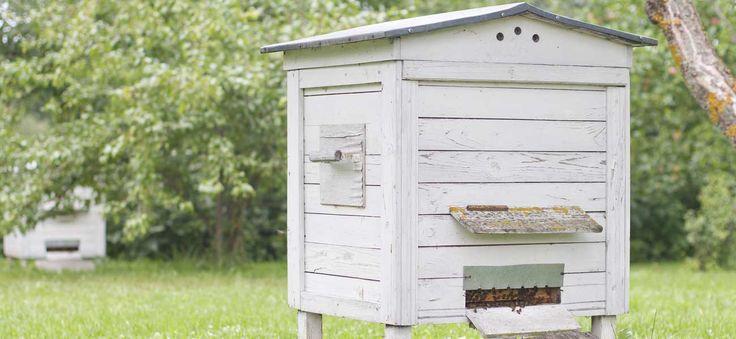 La formation en apiculture s'adresse à ceux qui souhaitent s'initier au métier d'apiculteur ou renforcer leur savoir-faire - Tout sur Ooreka.fr