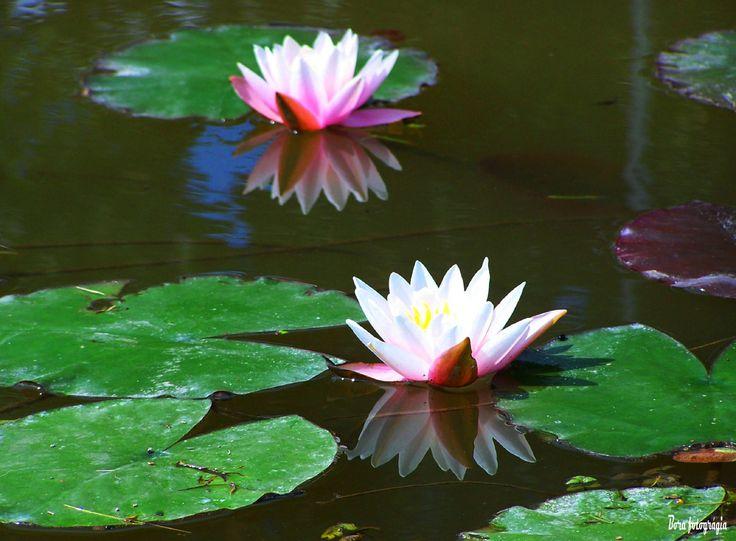 Virágtükör a kis tóban