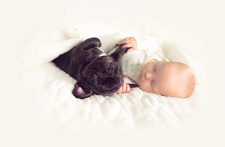 La historia de este perrito y bebé que nacieron el mismo día te enamorará | ActitudFEM