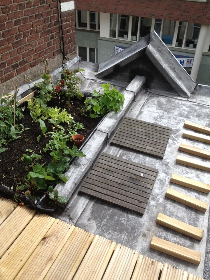 #5 Cityroofs gardening