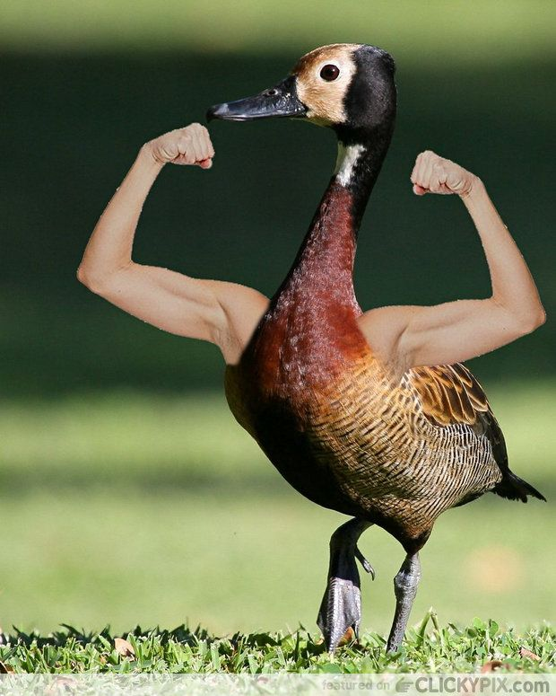 birds with human arms | Birds with Freaky Human Arms (44 ...