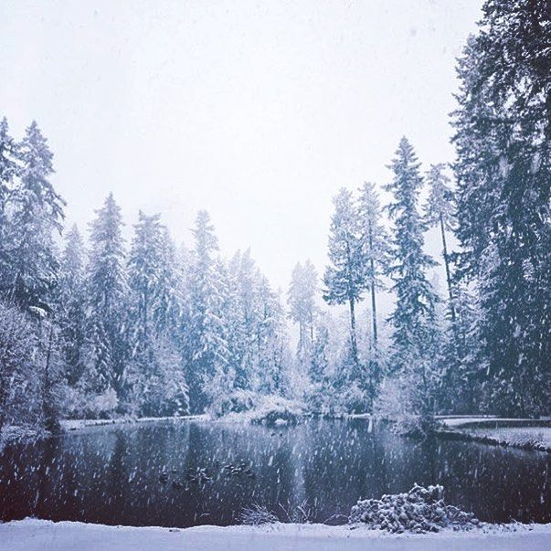 Who's dreaming of a white Christmas? ❄️ #Vancouver is getting a dusting of #snow today! ❄️❄️❄️❄️❄️❄️❄️❄️ #explore #adventure #backpacking #hiking #StanelyPark #YVR #Vancity #Vancouver #hostellife #hostelworld #travel #wunderlust #IGtravel #samesunnation