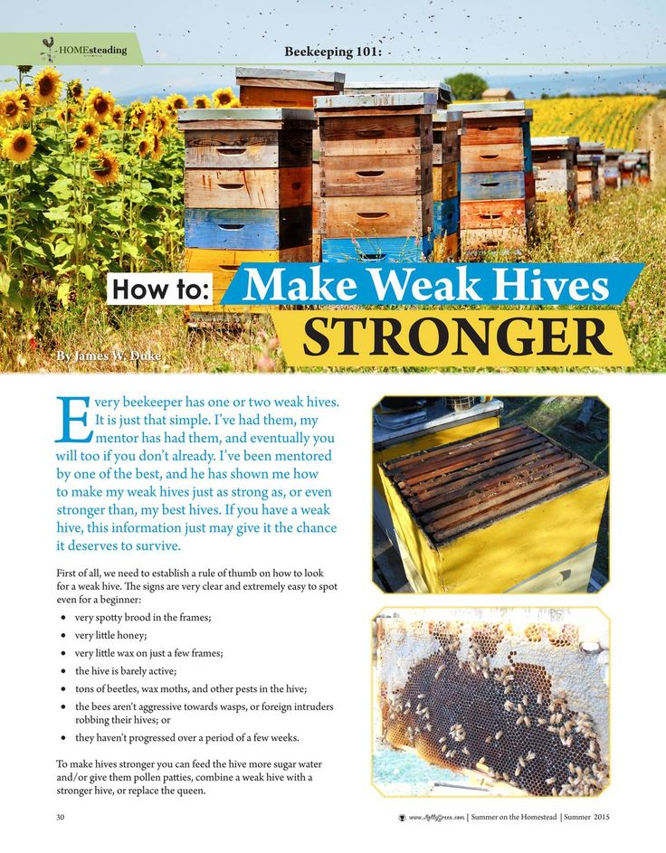 27 best Bee Settled! images on Pinterest Beekeeping, Bees and Bee - fresh apiary blueprint examples