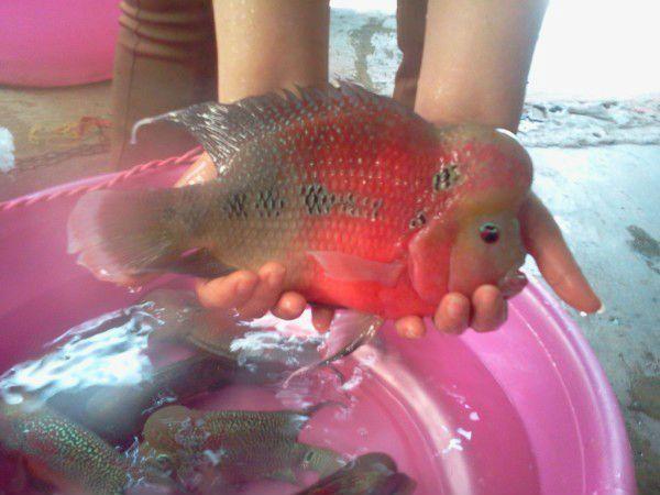 más de 25 ideas increíbles sobre pez flower en pinterest