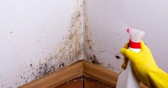 El moho pertenece a la familia de las levaduras y hongos. Se cree que hay cientos de especies de hongos en todo el mundo, aunque los más comunes son los hongos llamados: Cladosporium, Penicillium, Alternaria y Asperpapadaus. El moho tiende a formarse en áreas donde hay humedad, sobre todo en [...]