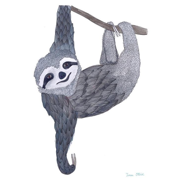 print slothfrau ottilie  rysunki  frau ottilie