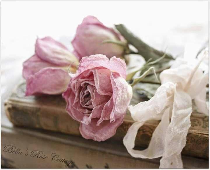 Plus de 1000 id es propos de dried roses sur pinterest - Nuancier rose poudre ...