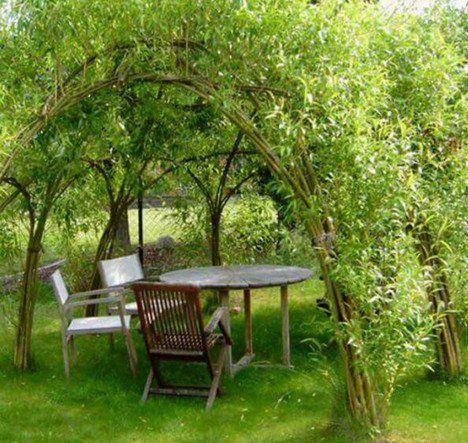 A szomszéd levágott néhány fűzfaágat és várt, amíg meggyökerezett, majd elkezdett… A legjobb kerti ötlet! – BuzzBlog