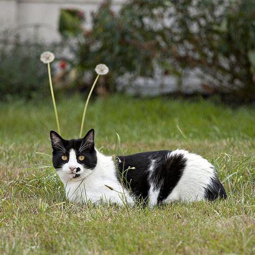 Dandelion photobomb!